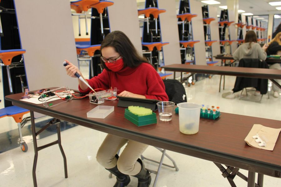 AP+Bio+students+gain+hands-on+experience+during+labs